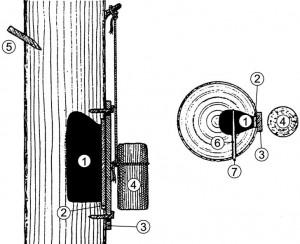 Przekrój poprzeczny ipodłużny barci (rycina według Blank-Weissberg 1937).