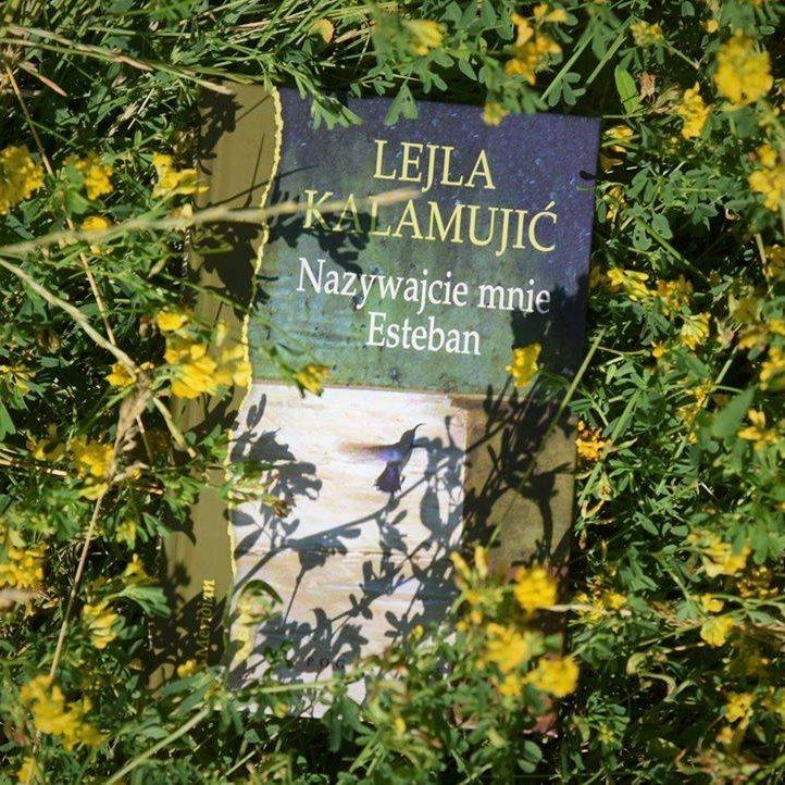 Książka położona natrawie iżółtych drobnych kwiatkach.